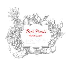 Best fruits vector sketch poster