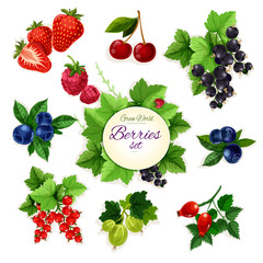 Berries. Forest and garden isolated berry icon set