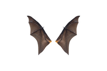 Bat wings isolated on white background