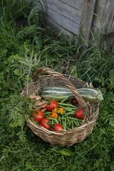 basket full of garden vegetables
