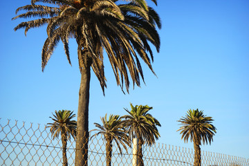 palm trees behind fence