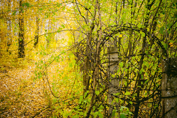 autumn landscape. forest road, blur bokeh, covered with yellow fallen leaves, and the barbed wire on concrete pillars