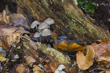 Forest Fungus on Tree Trunk in Autumn
