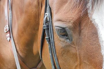 horse head close up shot