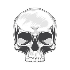 Skull hand drawn on a white background. Vector illustration