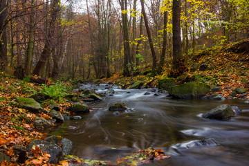Autumn creek in bohemian forest, Czech Republic.