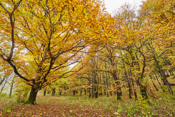 Deciduous forest in the autumn
