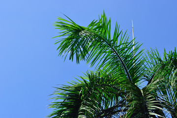 Green leaves of palm tree wish sky background