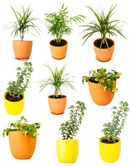 Collection of various potted plants
