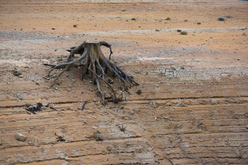 root on a dry lake