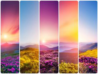 壁紙(ウォールミューラル) - Creative collage photo