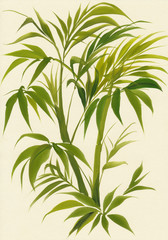 Original and stylish watercolor painting of palm bamboo