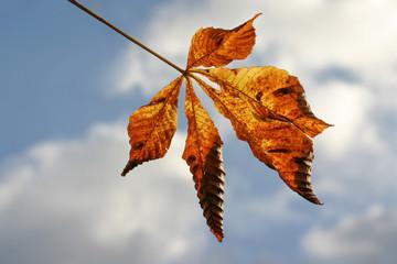 Blatt eines Kastanienbaum