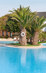 Palm in the centre of swimming pool