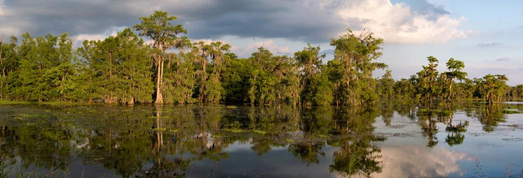 Louisiana Swamp Panoama