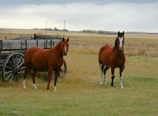 In de dag Olijf Horse & old wagon in field