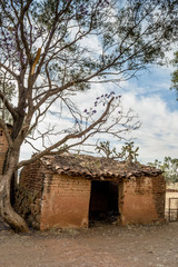 Vertical photo on color of an old and ruined adobe house beside a tree