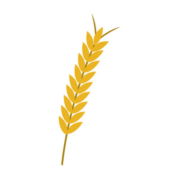 ear of wheat icon over white background. vector illustration