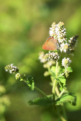 orange butterfly feeding on a white flower