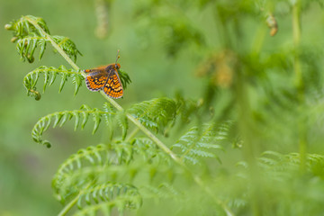orange butterfly hiding between green leaves