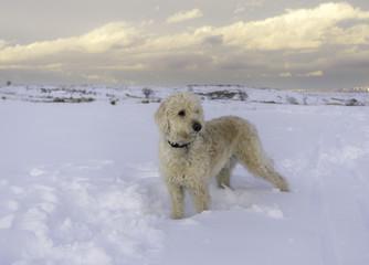 Deep snow on South Table Mountain