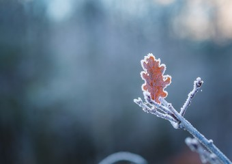 Rime on plants at cold winter day