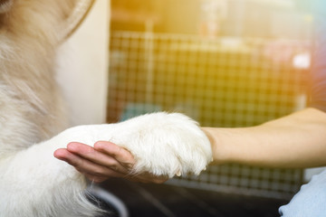 Dog hand shaking with human - friendship and pet training concept