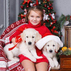Happy girl 6 years old brunette,hair braided in two braids,wearing a red knit dress,spends the Christmas holidays with his friends,two Golden Retriever puppy at home near Christmas tree