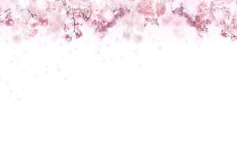 Wall Mural - 桜の背景 春イメージ