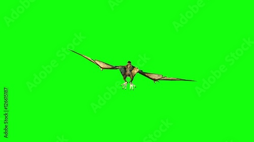pterodactyl fly 3d animation. green screen 4k footage.