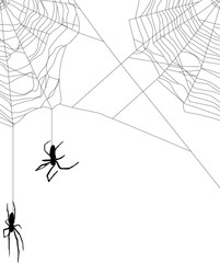 two small spiders in black web on white