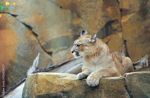 puma zoo deutschland