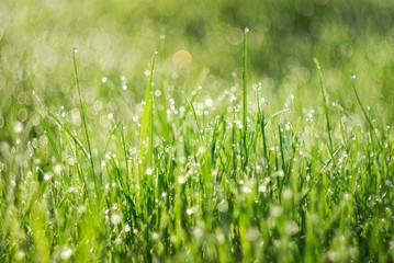 Green grass in the morning light