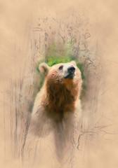 Ein Bär der in die Ferne schaut