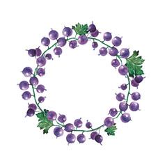 wreath of currant isolate on white background