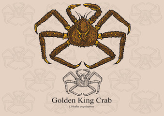 Golden King Crab. Vector illustration for artwork in small sizes. Suitable for graphic and packaging design, educational examples, web, etc.