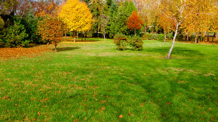 autumn at backyard