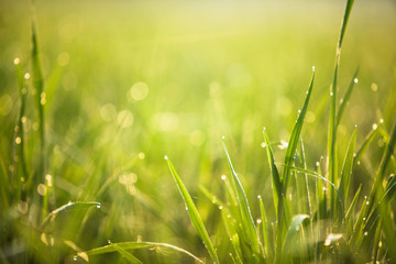 green grass with green bokeh background