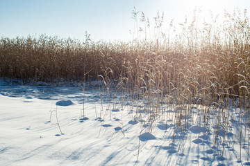 Finland. Baltic sea, bay. Empty beach covered with snow. High blu sky, reed, frost, footprint. Scenic peaceful winter landscape.