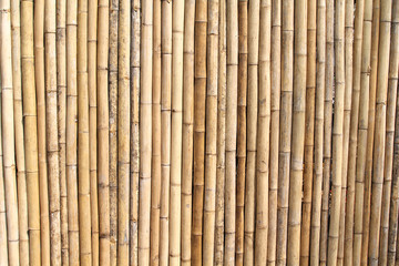 Beautiful yellow bamboo texture background.