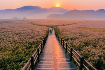 Wooden bridge Sunrise landscape at Suncheon bay Korea