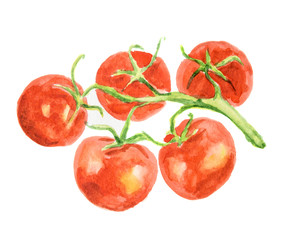 Isolated watercolor tomatoes on white background. Healthy and ripe fresh vegetable for cooking and decoration.
