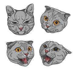 Cat set. Vector illustration