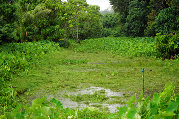 Green grass and lake
