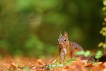 écureuil joyeux
