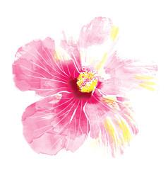Pink hibiscus flower,watercolor.
