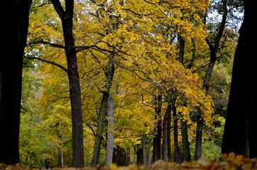 Germany, Leipzig, Clara-Zetkin-Park autumnal forest