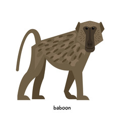 Baboon with small ears and a long snout