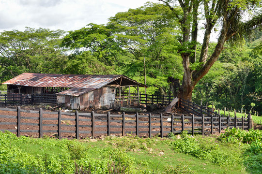 Horse and cow barn near Matagalpa on the way to Pita village, in the northern highlands of Nicaragua. Central America