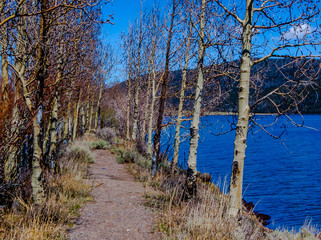 Path to the Summer Aspens